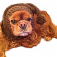 Pure Alpaca dog Snood Made to Measure in choice of Colours