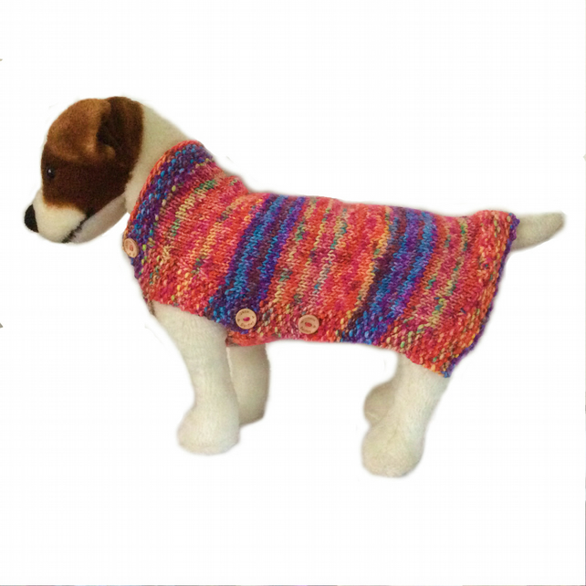 Bright  buttoned  Dog sweater