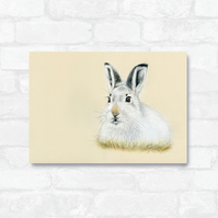 A4 Mountain Hare Print