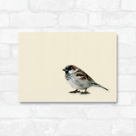 A4 Common Sparrow
