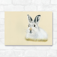 A3 Mountain Hare Print