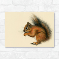 A3 Red Squirrel Print