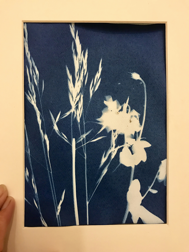 Riverbank sunography cyanotype 5