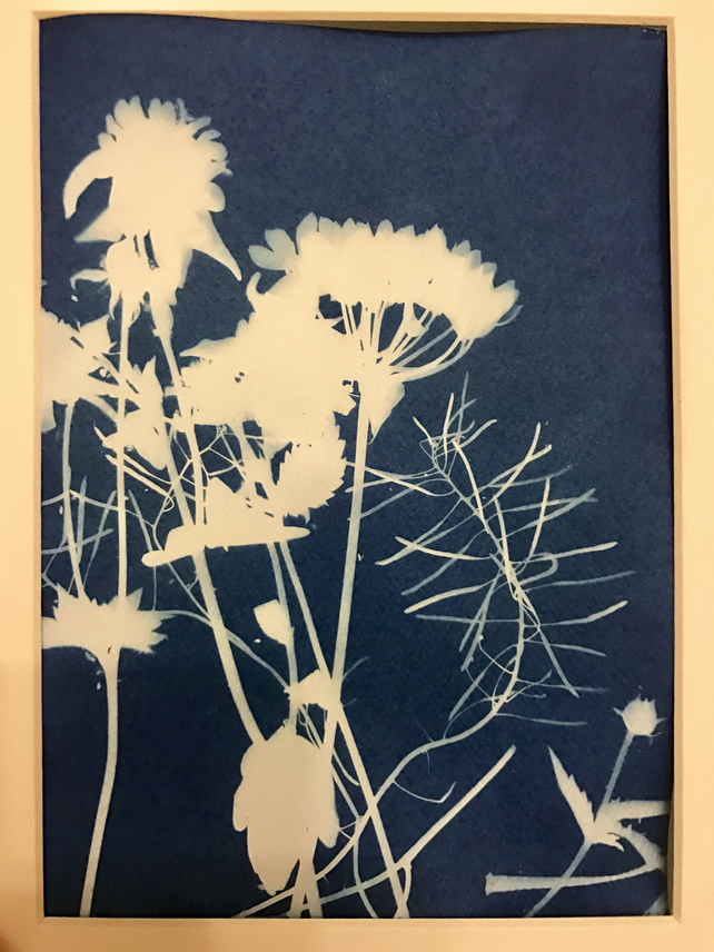 Riverbank Plants Cyanotype Sunography 4