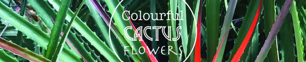 Colourful Cactus Flowers