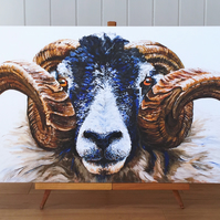 Swaledale Ram limited edition canvas print  - Sheep painting