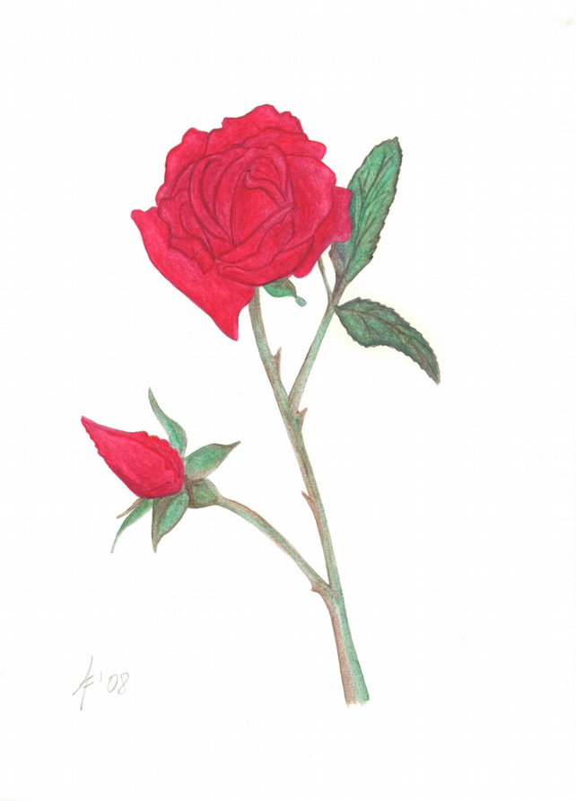 Red rose print, oil pastel, red flower and rosebud, wedding gift, botanical art
