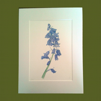 Bluebells spring woodland flower limited edition giclee print