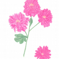 Pink Mums, chrysanthemums, giclee flower print of a botanical art oil pastel