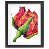 Framed - 'Red Rose' by artist Hannah Danielle - Framed and Mounted