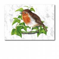 A6 Animal British Bird Wildlife Robin Greetings Birthday Card (F257)