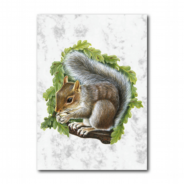 A5 Animal British Wildlife Grey Squirrel Greetings Birthday Card (F259)