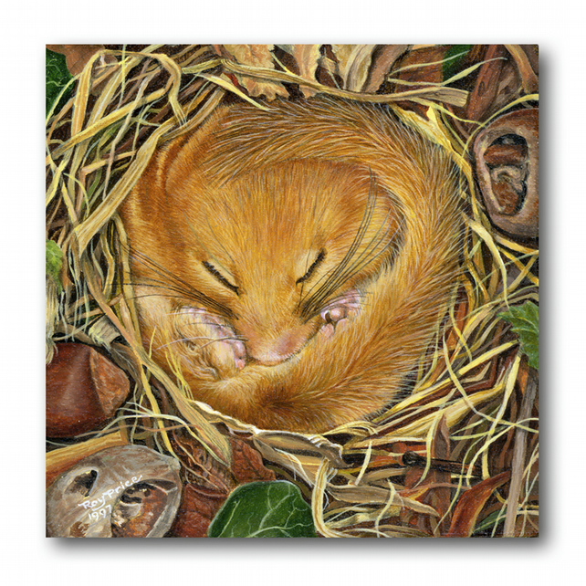 Animal British Wildlife Birthday Card - Dormouse (F280)