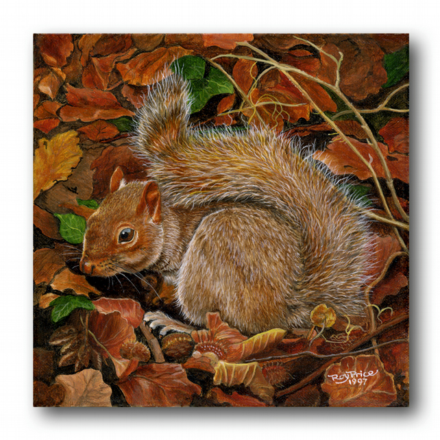Father's Day Card - Red Squirrel, from a painting by Royden Price (F285)