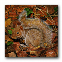 Animal British Wildlife Father's Day Card - Red Squirrel (F285)