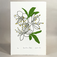 Blackthorn Blossom - Original Limited Edition LinoCut Print