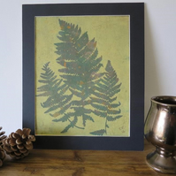 3 Fern Leaves