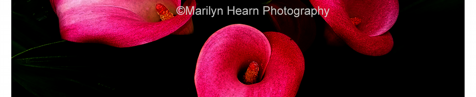 Marilyn Hearn Photography