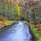 Scottish Highland Woodland Road