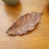 Small Sweet Chestnut Leaf