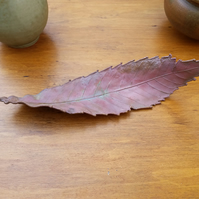 Medium Sweet Chestnut Leaf