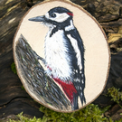 Great spotted woodpecker painting on a chunky slice of Hazel wood.