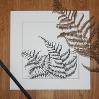 Print of pen and ink drawing, bracken, fern