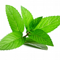 Peppermint Fragrance Oil 10 ml for Diffusers, Candles, Pot Pourri  & Soap