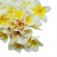 Frangipani  Fragrance Oil 10 ml for Diffusers, Candles,  & Soap 10ml