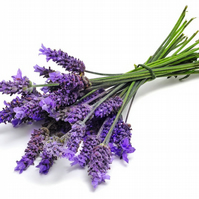 Lavender Fragrance Oil 10 ml for Diffusers, Candles, Pot Pourri  & Soap