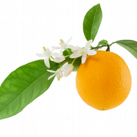 Neroli Fragrance Oil 10 ml for Diffusers, Candles, Pot Pourri  & Soap