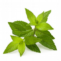Peppermint Fragrance Oil 10 ml for Diffusers, Candles, Pot Pourri  & Soapi