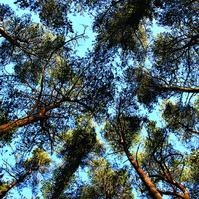 Trees 01 Photo Card MC14803
