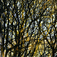Trees 02 Photo Card MC14804