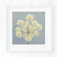 Cow parsley print, summer wildflower print, blue wall art, botanical art print