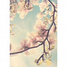 Spring magnolia photogaphy, gifts for her, dreamy floral art, botanical print