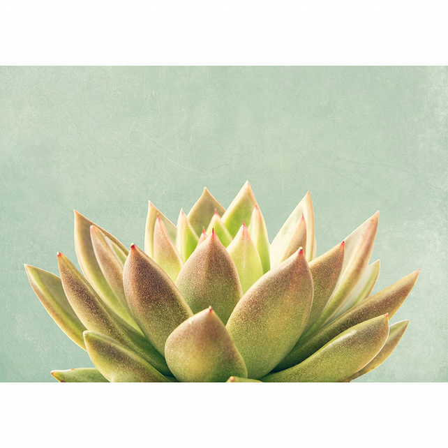 Succulent print, green botanical wall art, minimalist home decor