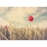 Poppy photograph, vintage style photography, red Poppy print, Poppy and wheat