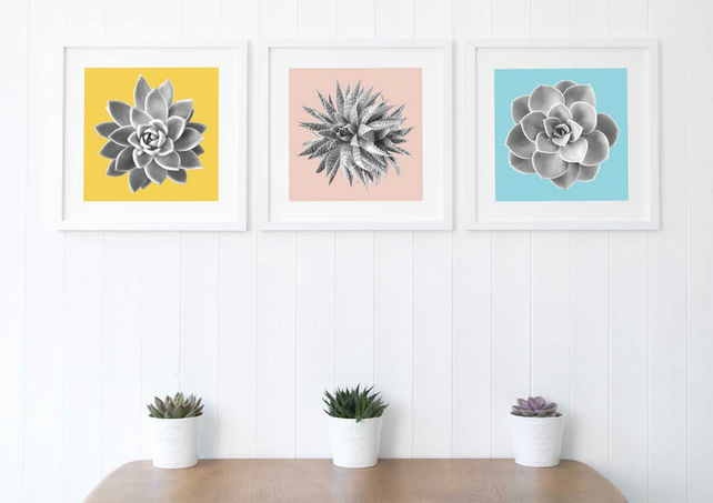 Set of 3 minimalist Succulent prints, BLUE, YELLOW, PINK, Fine Art Photography