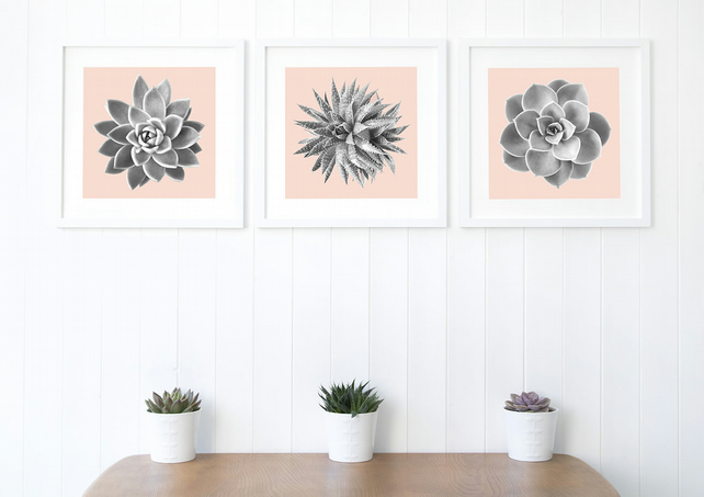 Succulent Fine Art Photography, set of three prints, BLUSH pink and GREY