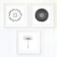 Deconstructed dandelion prints, black and white fine art photography, set of 3