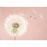 Pink nursery wall art, baby girl nursery art, make a wish dandelion clock print