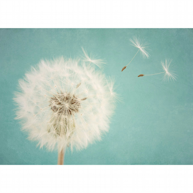 Duck egg blue 'Make a wish' dandelion art print