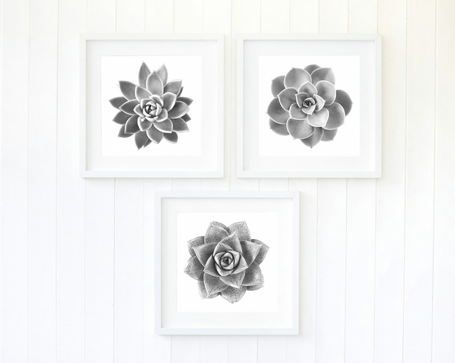 Monochrome succulent prints, set of three, black and white fine art photography