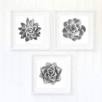 Plant decor - Set of three succulent art prints - Modern fine art photography