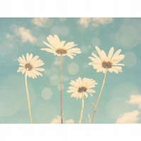 Daisies, a dreamy botanical print for nature lovers and sunny home decor schemes