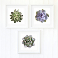 Set of three succulent prints, nordic style decor, minimalist photgraphy