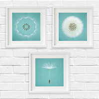 Deconstructed dandelion clock, Duck egg blue set of three large dandelion prints