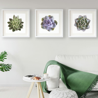 Set of three succulent prints - Plant wall art - Simple nordic style decor
