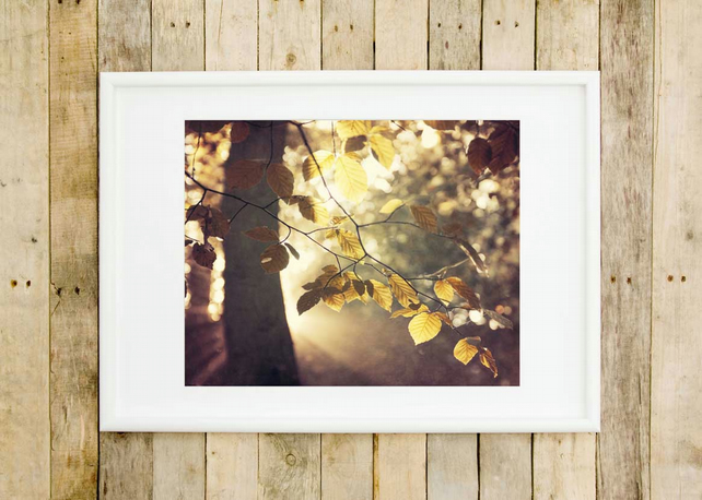 Woodland wall art print - Autumn leaves art print - Fine art photography